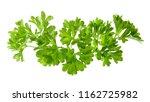 bunch of parsley | Shutterstock . vector #1162725982