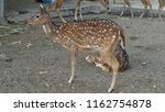 deer with beautiful antlers | Shutterstock . vector #1162754878