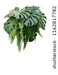 tropical foliage plant bush of... | Shutterstock . vector #1162817782