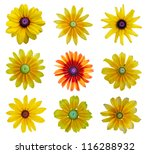 Collection Blackeyed Susan...