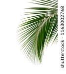 Tropical Coconut Palm Leaf...