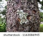 Small photo of Tree bark texture,Bark of tree. Old bark. Wood texture. The dark bark. Poplar bark texture.