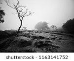 dead tree in the mist on the... | Shutterstock . vector #1163141752