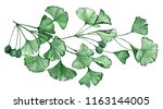 ginkgo biloba known as the... | Shutterstock . vector #1163144005