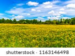 summer meadow flowers forest... | Shutterstock . vector #1163146498