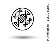 dna icon vector. modern simple... | Shutterstock .eps vector #1163256862