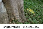 camouflage of a lizard on the... | Shutterstock . vector #1163260552