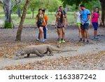 komodo island   indonesia  ...   Shutterstock . vector #1163387242