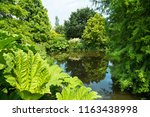 small duck pond surrounded by... | Shutterstock . vector #1163438998