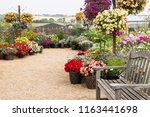 a beautiful vibrant flower... | Shutterstock . vector #1163441698