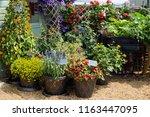 a beautiful vibrant flower...   Shutterstock . vector #1163447095