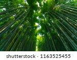 arashiyama bamboo grove forest... | Shutterstock . vector #1163525455