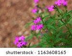 purple flower closeup | Shutterstock . vector #1163608165