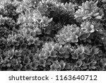monotone nagaokatenmangu with...   Shutterstock . vector #1163640712