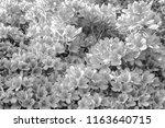 monotone nagaokatenmangu with... | Shutterstock . vector #1163640715