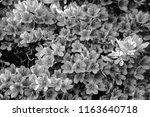 monotone nagaokatenmangu with... | Shutterstock . vector #1163640718
