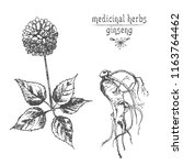 Realistic Botanical Ink Sketch...