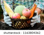 fall harvest cornucopia. autumn ... | Shutterstock . vector #1163804362