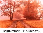 Autumn Foggy Dirt Road....