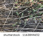 old and new grass. | Shutterstock . vector #1163844652