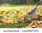 Rake with fallen leaves at...
