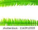 closeup green fern leaf...   Shutterstock . vector #1163913535
