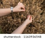 hand show that the moth... | Shutterstock . vector #1163936548