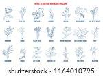 best herbs that lower high...   Shutterstock .eps vector #1164010795