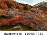 colorful beech trees in autumn... | Shutterstock . vector #1164074752