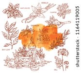 collection of herbs and spice ... | Shutterstock .eps vector #1164119005