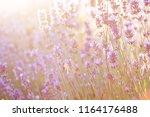 summer blossom background....   Shutterstock . vector #1164176488