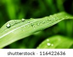 Close Up Of A Leaf And Water...