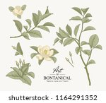 sketch floral botany collection.... | Shutterstock .eps vector #1164291352