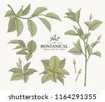 sketch floral botany collection.... | Shutterstock .eps vector #1164291355
