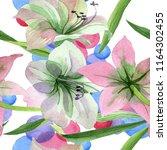 watercolor pink amarylis flower.... | Shutterstock . vector #1164302455