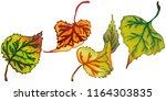 vector autumn leaves of poplar. ... | Shutterstock .eps vector #1164303835