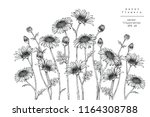 sketch floral botany collection.... | Shutterstock .eps vector #1164308788