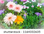 soft pink and yellow hybrid... | Shutterstock . vector #1164332635