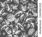 realistic botanical ink sketch... | Shutterstock .eps vector #1164361132