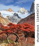 fitz roy mountain and beech... | Shutterstock . vector #1164434725