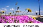 beautiful flower background.... | Shutterstock . vector #1164504502
