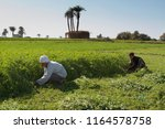 sohag  egypt  01 january 2013 ... | Shutterstock . vector #1164578758