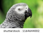 Portraits Of Parrots
