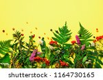 ingredients of herbal... | Shutterstock . vector #1164730165