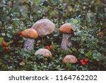 Mushrooms  Forest