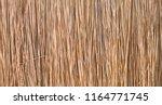 background reeds  texture of...   Shutterstock . vector #1164771745