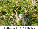 yasuni national park  ecuador   ... | Shutterstock . vector #1164807475