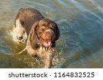 german hunting watchdog... | Shutterstock . vector #1164832525