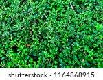 background pattern  beautiful...   Shutterstock . vector #1164868915