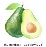 avocado  watercolor hand drawn... | Shutterstock . vector #1164894325